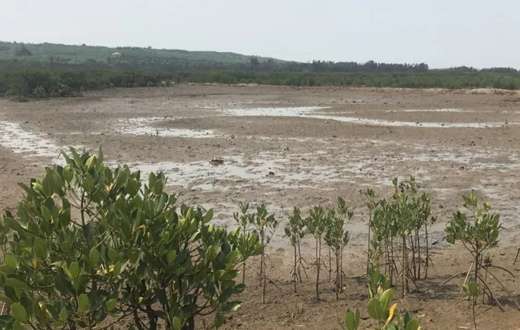 新盈红树林国家湿地公园第8个基础设施项目开建