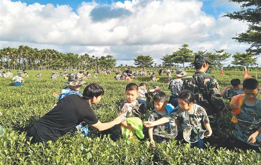 百余名小朋友走进海垦茶园基地 感受海垦茶文化