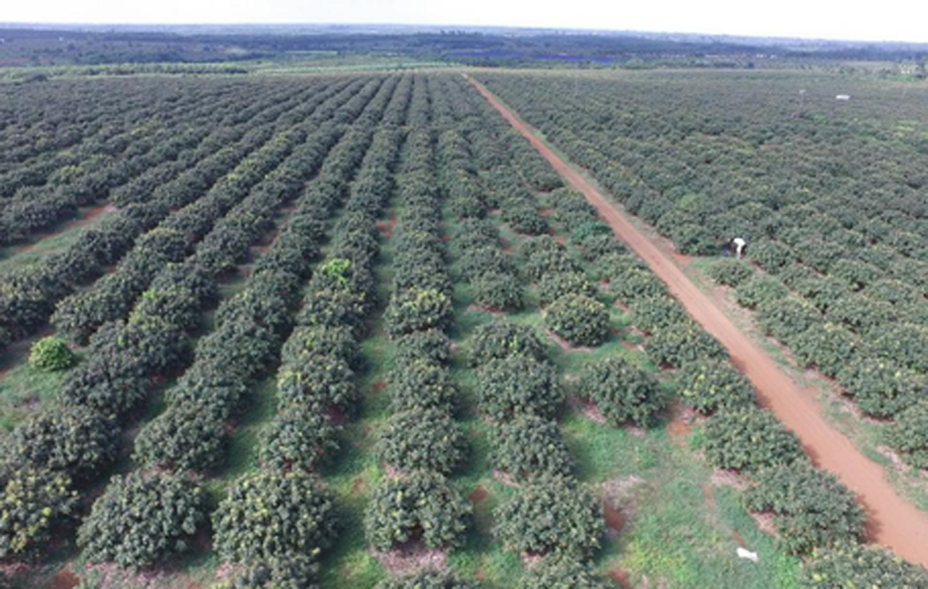 """憾来妫垦3个农业产业园入选""""海南省2020年省级现代农业产业园"""""""