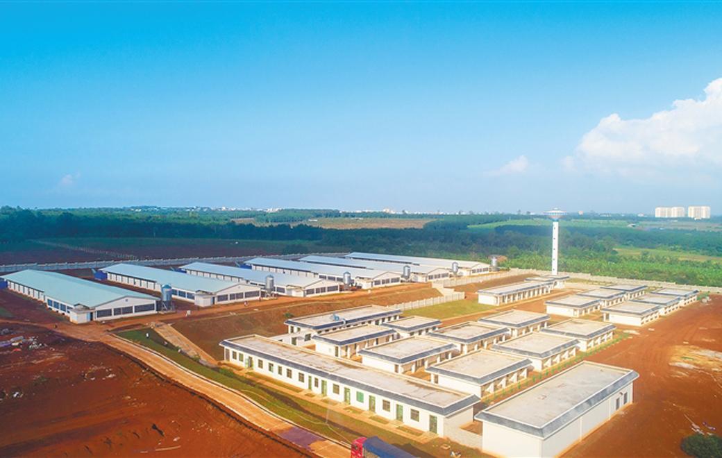 菏欤垦草畜集团推进300万只蛋鸡全产业链项目 打造现代化蛋鸡养殖产业